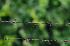 Barb Wire and Ant With Rainy Royalty Free Stock Images
