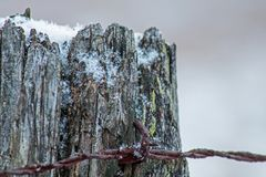 Barb Wire Attached To Old staket Post royaltyfri fotografi
