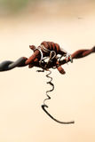 Barb wire. Beautiful closeup shot of rusted barb wire Royalty Free Stock Images
