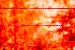 Barb Wire Close Up Photographie stock