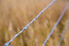 Barb Wire Country Fence Royalty-vrije Stock Afbeelding