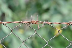 Barb wire. Detail of fence with barb wire stock photography