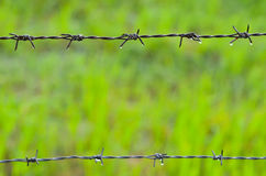 Barb wire with dew Stock Images