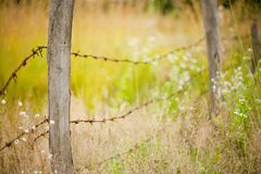 Barb wire fence. Fence made of poles with barbed wire Royalty Free Stock Photography