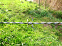 Barb wire fence close up with small spider rag on meadow backgro Royalty Free Stock Images