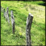 Barb wire fence in Kula on Maui. A barb wire fence at a hiking trail in Kula on Maui in Hawaii Royalty Free Stock Photo