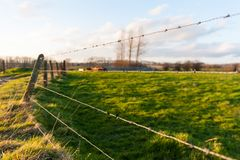 Barb wire fence at sunset. Impression of a barbed wire fence running through the flemish country side. Image taken around sunset stock photos
