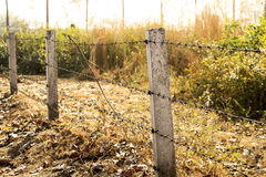 Barb wire fencing Royalty Free Stock Photography