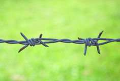 Barb. Wire on the green background Royalty Free Stock Photos