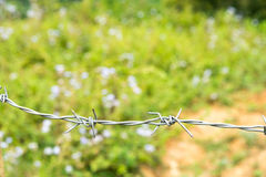 Barb wire before the green field. With flowers bokeh Stock Image