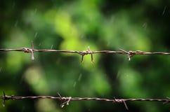 Barb Wire i regnig dag med grön bakgrund arkivfoto