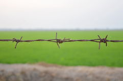 Barb wire. A barb wire in paddle field Stock Photo