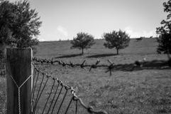 Barb wire. A perspective, bokeh, black and white image of a barb wire fence Royalty Free Stock Photography