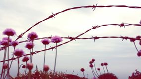 Barb wire pink flowers. Sky dunmore Waterford ireland Stock Photography