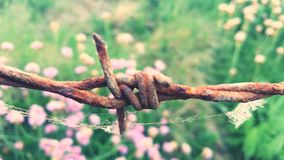 Barb wire with pink flowers. Barb wire up close spiders web pink flowers and grass Stock Images