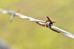 Barb wire. Sharp and rusty barbs on barbed wire Royalty Free Stock Photography