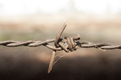 Barb wire. In the silence land Royalty Free Stock Photos