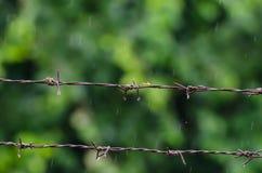 Barb Wire und Ant With Rainy lizenzfreie stockbilder