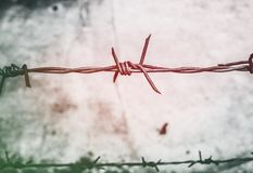 Barb, Wires, Barbed Stock Images