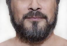 Barba de sal e de pimenta Imagens de Stock Royalty Free