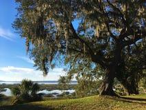 Barba dei frati che appende in una quercia in Beaufort, Carolina del Sud fotografia stock