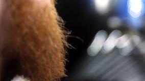 Barba do corte e da preparação do close up video estoque