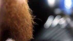Barba do corte e da preparação do close up vídeos de arquivo