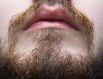 Barba e baffi brunastri su un primo piano dell'uomo Immagini Stock
