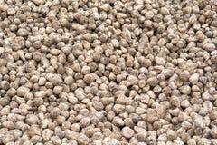 Barbabietola da zucchero dopo il raccolto Fotografia Stock