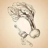 Barbabietola del fondo di vettore verdura Fotografie Stock