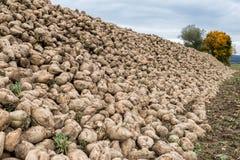 Barbabietole da zucchero riunite su un acro, Baviera, Germania Fotografie Stock Libere da Diritti
