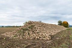 Barbabietole da zucchero riunite su un acro, Baviera, Germania Fotografie Stock