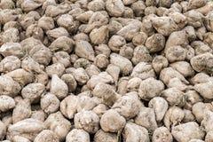 Barbabietole da zucchero riunite su un acro, Baviera, Germania Immagini Stock Libere da Diritti