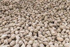 Barbabietole da zucchero riunite su un acro, Baviera, Germania Immagini Stock