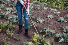 Barbabietole di zappatura dell'agricoltore Immagine Stock Libera da Diritti
