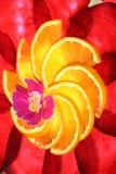 Barbabietole - montante arancione Fotografie Stock