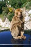 Barbaby-Affe, der auf der Wand übersieht das Hafengebiet, Gibraltar, Großbritannien, Westeuropa sitzt Lizenzfreie Stockbilder