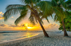 Barbade Image stock