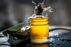 Barbadensis, aloe Vera ed il suo olio estratto in una bottiglia trasparente Fotografia Stock Libera da Diritti
