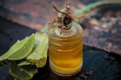 Barbadensis, aloe Vera ed il suo olio estratto in una bottiglia trasparente Fotografie Stock