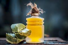 Barbadensis, aloe Vera ed il suo olio estratto in una bottiglia trasparente Fotografie Stock Libere da Diritti