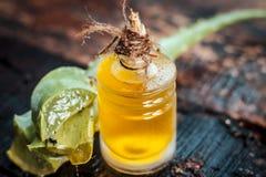 Barbadensis, aloe Vera ed il suo olio estratto in una bottiglia trasparente Immagini Stock