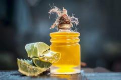 Barbadensis, aloe Vera ed il suo olio estratto in una bottiglia trasparente Immagine Stock Libera da Diritti