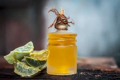 Barbadensis,Aloe Vera and its extracted oil in a transparent bottle. Barbadensis,Aloe Vera and its extracted oil in a transparent bottle for hair loss and Royalty Free Stock Photos