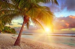 Barbados stockfoto