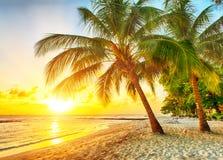 Barbados obrazy royalty free