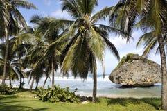 Barbados, as Caraíbas, costa leste fotos de stock royalty free