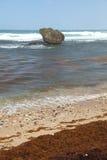 barbados bathsheba Fotografering för Bildbyråer