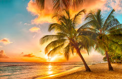 Barbados. Beautiful sunset over the sea with a view at palms on the white beach on a Caribbean island of Barbados Stock Photo