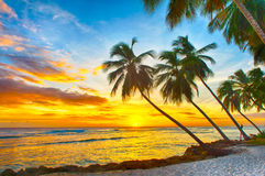 Barbados. Beautiful sunset over the sea with a view at palms on the white beach on a Caribbean island of Barbados Stock Image
